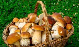 Как грибы