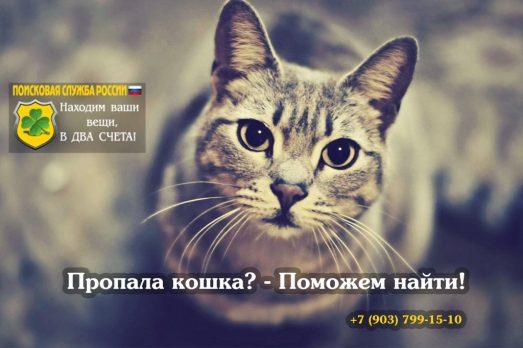 Убежала кошка как найти?