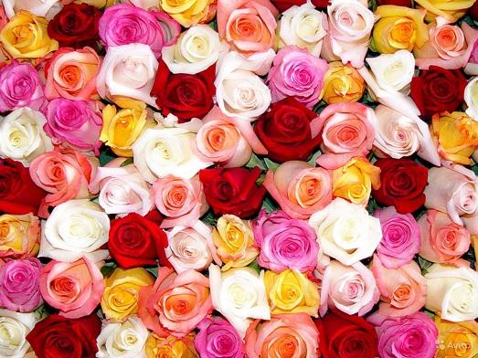 Как ухаживать за букетом роз?