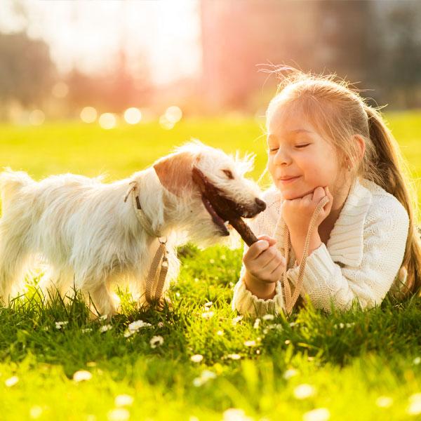 породу-собак-выбрать-для-ребенка