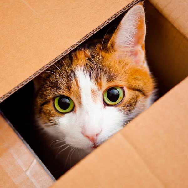 заводить-кота-в-квартире или нет